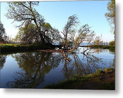 Metal Print featuring the photograph Quiet Reflection by Davandra Cribbie
