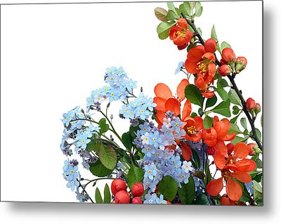 Metal Print featuring the photograph Quince Chaenomeles And Forget Me Nots Myosotis  Postcard  by Aleksandr Volkov
