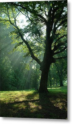 Radiant Tree Metal Print by Peg Toliver