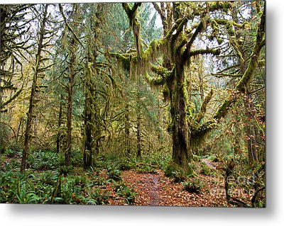 Rain Forest In Fall Metal Print