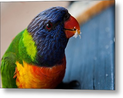 Metal Print featuring the photograph Rainbow Lorikeet by Carole Hinding