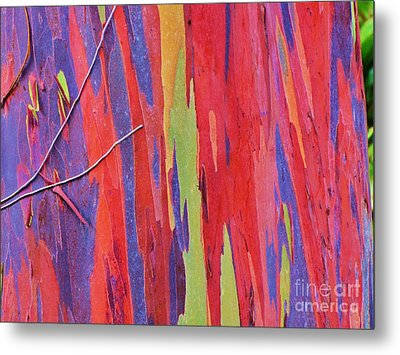 Metal Print featuring the photograph Rainbow Of Eucalyptus Bark by Michele Penner