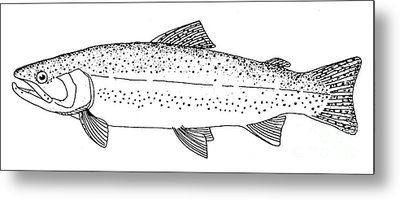 Rainbow Trout Metal Print by Granger