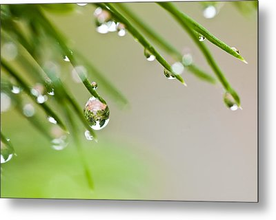 Raindrops On Needles Metal Print by Trevor Chriss