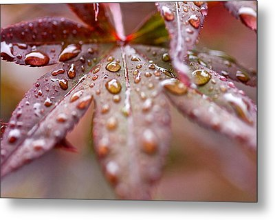 Raindrops Metal Print by Scott Holmes