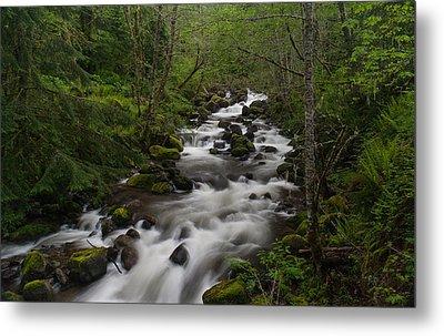 Rainier Forest Flow Metal Print by Mike Reid