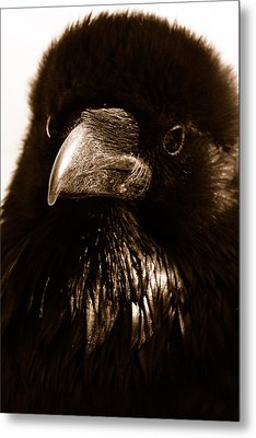 Raven In Black Metal Print by Michael Cinnamond