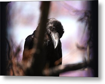 Raven Outside My Window Metal Print