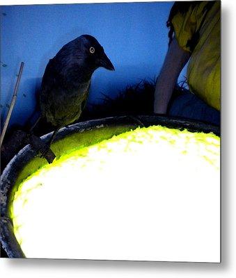 Raven Reflecting  Metal Print by Colette V Hera  Guggenheim