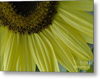 Metal Print featuring the photograph Rays Of Sunshine by Tamera James