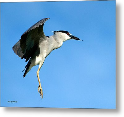 Reaching For The Nest Metal Print