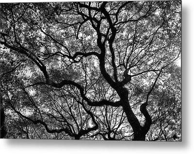 Reaching To The Heavens Metal Print by Andrew Crispi