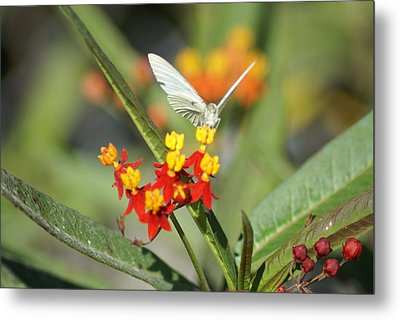 Metal Print featuring the photograph Ready For Flight by Jerry Cahill