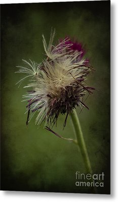 Metal Print featuring the photograph Ready To Fly Away... by Clare Bambers