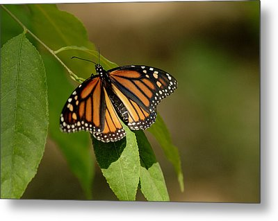 Ready To Fly Metal Print by Dean Bennett