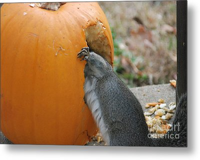 Metal Print featuring the photograph Real Hungry Squirrel by Mark McReynolds