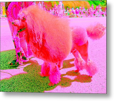 Really Pink Poodle Metal Print by Randall Weidner