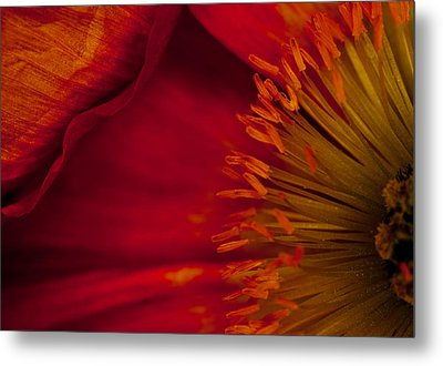 Red Addiction Metal Print