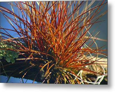 Metal Print featuring the photograph Red Air Plant by Jeanne Andrews