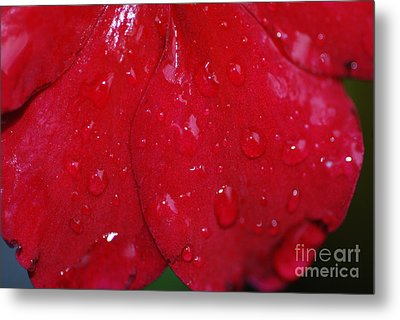 Red And Wet Metal Print by Paul Ward