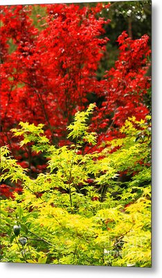 Red And Yellow Leaves Metal Print by James Eddy
