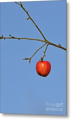 Red Apple Metal Print by Conny Sjostrom