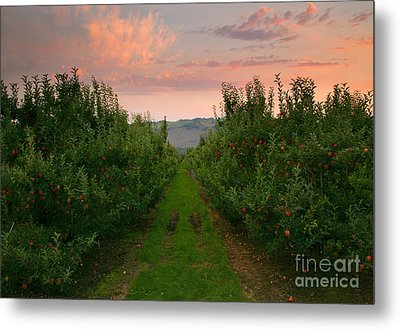 Red Apple Sunset Metal Print by Mike  Dawson
