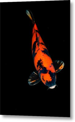 Red Bekko01 Metal Print
