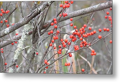 Red Berry Branch Metal Print