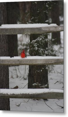 Metal Print featuring the photograph Red Bird by Stacy C Bottoms