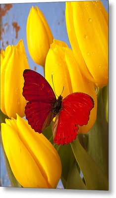 Red Butterful On Yellow Tulips Metal Print by Garry Gay