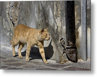 Metal Print featuring the photograph Red Cat In Burano by Raffaella Lunelli