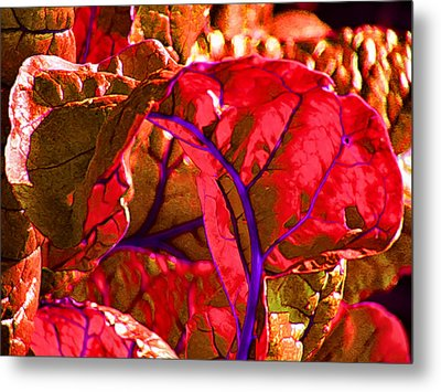 Red Chard Metal Print by Rory Sagner