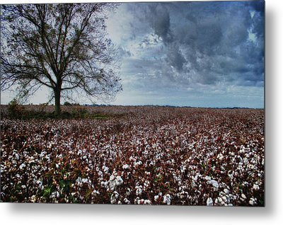 Red Cotton And The Tree Metal Print