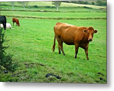 Metal Print featuring the photograph Red Cow by Charlie and Norma Brock