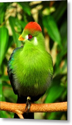 Red Crested Turaco Metal Print by Puzzles Shum
