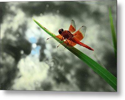 Red Dragonfly Metal Print by Viktor Savchenko