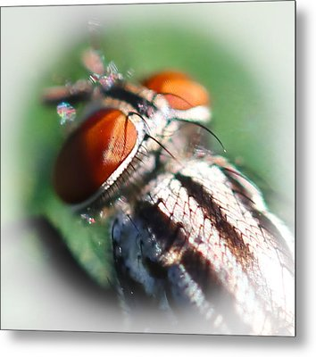 Red-eye Flight Metal Print by Maureen  McDonald