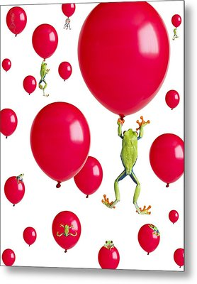 Red-eyed Treefrogs Floating On Red Metal Print