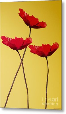Red-flowered Corn Poppies Metal Print by MaryJane Armstrong