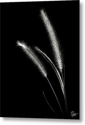 Red Fountain Grass In Black And White Metal Print by Endre Balogh
