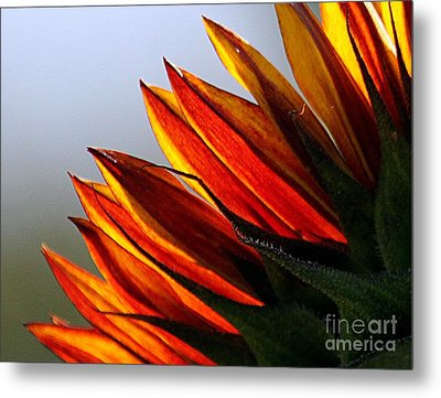 Red Gold Metal Print by Erica Hanel
