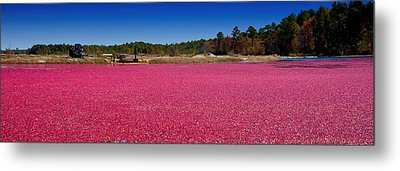 Red Harvest Metal Print