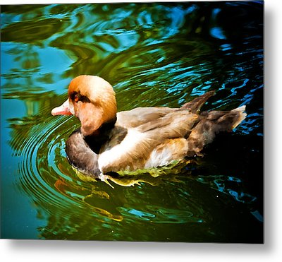 Red Head Duck Metal Print by Mickey Clausen