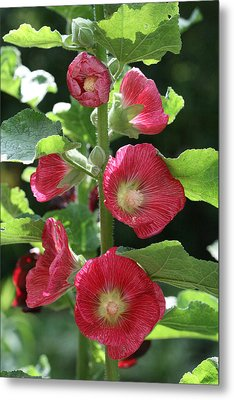 Metal Print featuring the photograph Red Hollyhocks by Peg Toliver