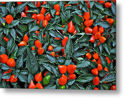 Red Hots Metal Print by Mary Machare
