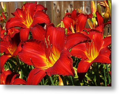Red Hots Return Metal Print by Bruce Bley