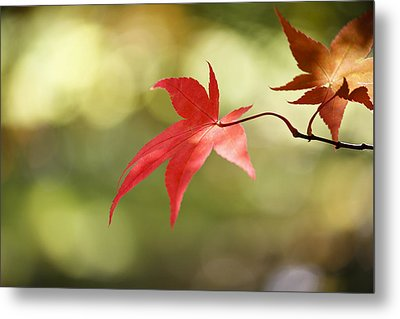 Metal Print featuring the photograph Red Leaf. by Clare Bambers