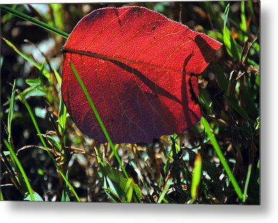 Red Leaf On Green Metal Print