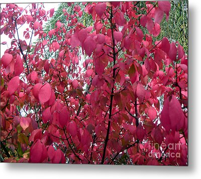 Red Leaves I Metal Print by Alys Caviness-Gober